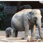 Grossmutter Ceyla und das nur wenige Tage alte Elefantenkalb