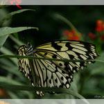Schmetterling (Art-Nr. 006)
