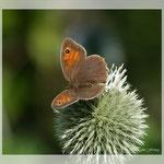 Schmetterling (Art-Nr. 001)