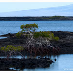 Galapagos (7033)