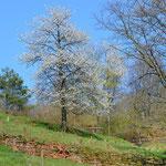 Modenbachtal bei Hainfeld