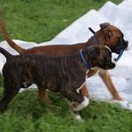 Leo und Bruder Lennox
