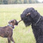 Leo mit der Schwarzen Terrier Hündin Carmina Burana vom Kellergeist