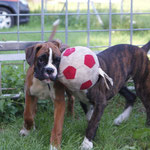 Lennox, der Ball ist Leo.
