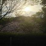 江津市 中央公園の朝日