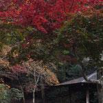 宮島 紅葉谷公園