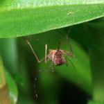 Mosquito by Randy Stapleton