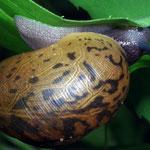 Snail by Randy Stapleton