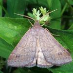 Woods moth by Randy Stapleton