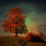 Der alte Lindenbaum