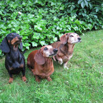 Forti, Benny und Lissy
