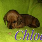 Chloe 04.05.2017  vergeben