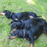Viel zu warm, v.o. Rikke, Mama Fortuna und Arti