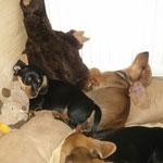 Entspanntes Schlafen oder auch Doga genannt