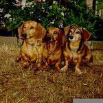 Calle, Benny und Lissy