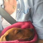 Chloe-Fine auf der Heimfahrt in Ihr neues Zuhause 10.06.2017