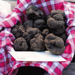 Panier de truffes dans le Lot durant un séjour au gîte de Poudally