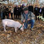 Cavage au cochon