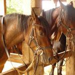vacance à cheval