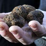 Truffes noires de Lalbenque