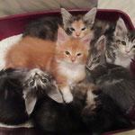 """Das Wort Katzen""""klo"""" wird völlig überbewertet..."""