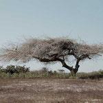 Sénégal - Bousse au Lac rose