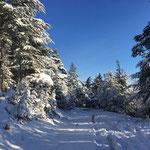 un sentier enneigé dans la forêt du gite de la gorre en location en ardeche