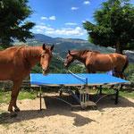 les 2 chevaux du gite de la gorre autour de la table de ping pong prés d'un arbre location en ardeche