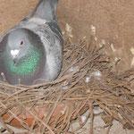 Doffer op nest.