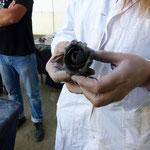 Une sculpture en argile faite par un patissier de métier, dans les mains du sculpteur Isabelle Coupeau