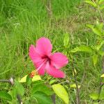 Blüte - flower