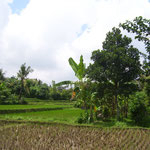 Reisfeld mit Aussicht - rice field with a view