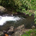 Wildbach - creek