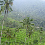Ricefields up in the mountains