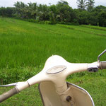 ...and another Vespa...and ricefield also.