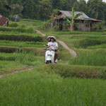 A path in the ricefields