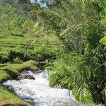 following a brook