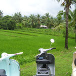 and Vespa with Rice - but don´t try to eat it...