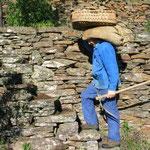 Paysan cévenol, du début du siècle dernier, montant sur une faisse (terrasse) avec son sacol (sac), son bêchard (outil) et son banastou (panier). www.senechas.com/F/SF02.htm