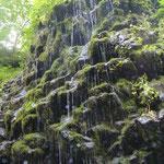 側壁から伏流水が滝状になって流れ出る。