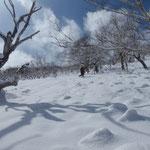 上部斜面は開けている。ただ、暖気で落ちた木からの雪がダブり状になっている。
