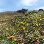 外輪はもう土が出て花が咲いていた。
