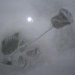 """""""Rosa"""" matita su carta - 2008 - Collezione privata"""