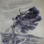 """""""Offesa del vento"""" Matita e Biro su carta - 30x42 - Quasi completato nel 1986, terminato nel 2008."""