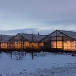 Treibhäuser in Hveragerði