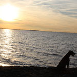 Hunter beim Sonnenuntergang am Jadebusen