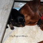 Amaru schläft auf Mamis Schnautze <3