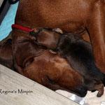 Arielle kuschelt bei Mami <3