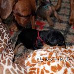 Unsere Ruby schaut sich mal das riesen Ding an, Giraffe oder Pony <3
