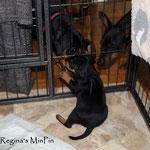 Amaru findet die Tanten und Onkels hinter dem Zaun sehr interessant <3